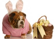 easter_dog_sweater_knit13-(