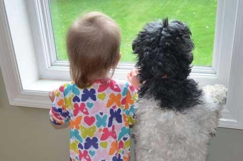 bestfriends-dog-and-baby