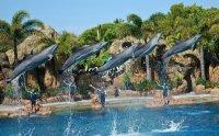 sea_world_-_dolphins