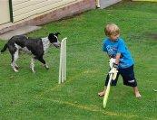 backyard_cricket