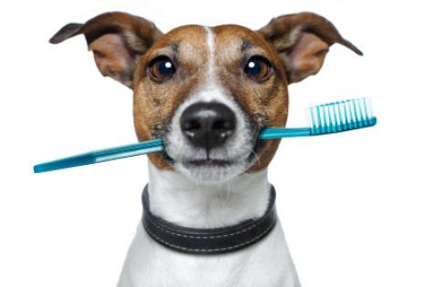 Las #mascotas tienen su propio enjuague bucal