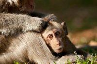 monkey_mum