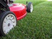 freshly_mown_grass