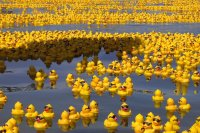 rubber_ducks