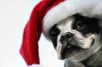 dog_with_santa_hat_happy_christmas
