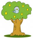 partridge-pear-tree
