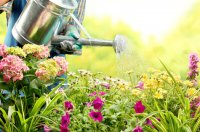 mop-flowers-watering