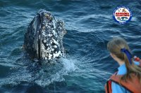 Narooma charters and montague island tours whale watching 2