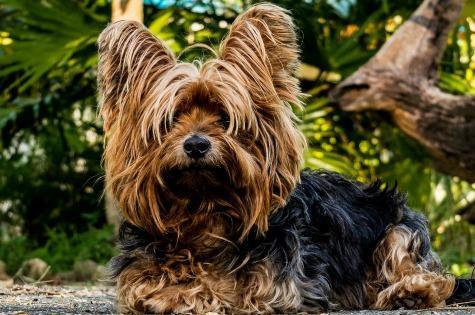 Factors that affect dog skin