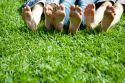 Lawn care 1