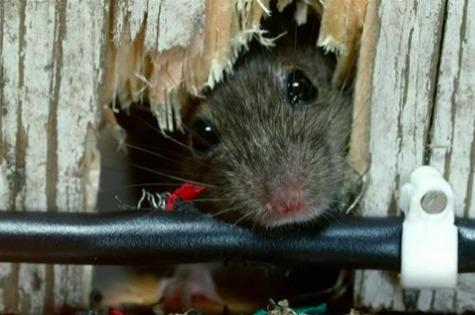 Mouse-house-panic