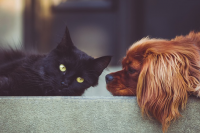 Heres-the-truth-about-cat-lovers-and-dog-lovers